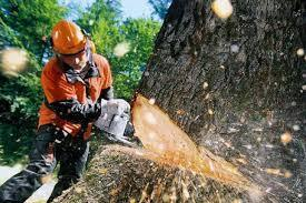 Аварийные деревья закон