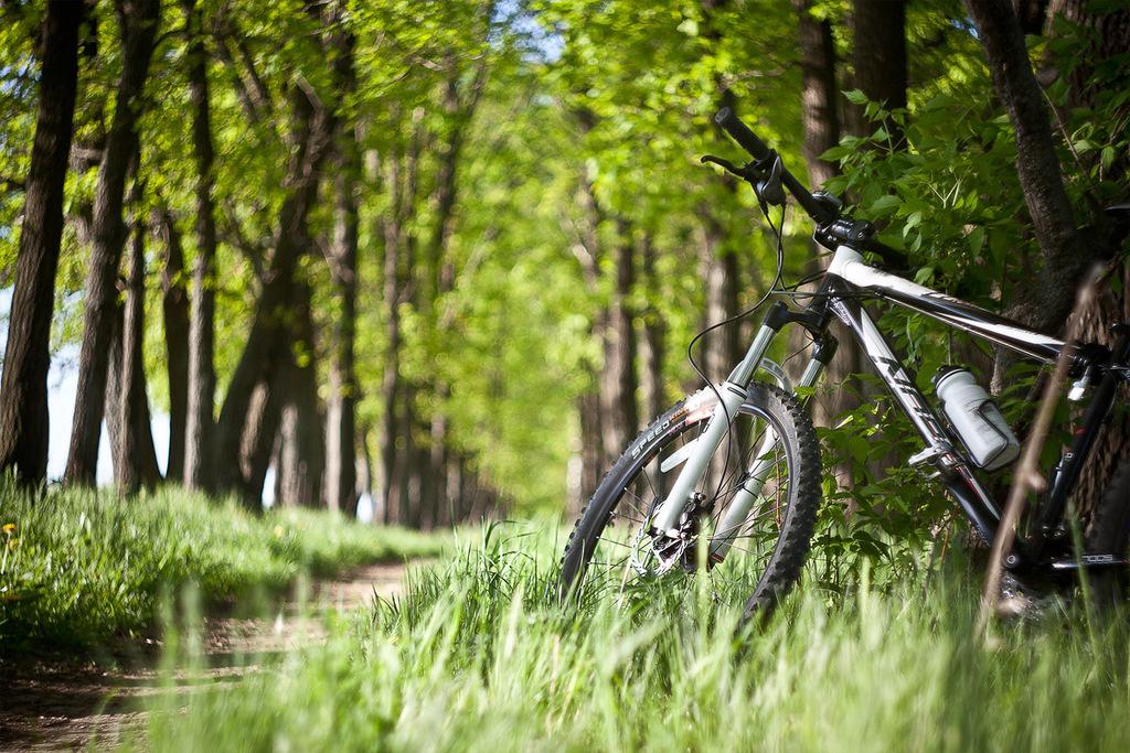 Прогулка на велосипедах картинки