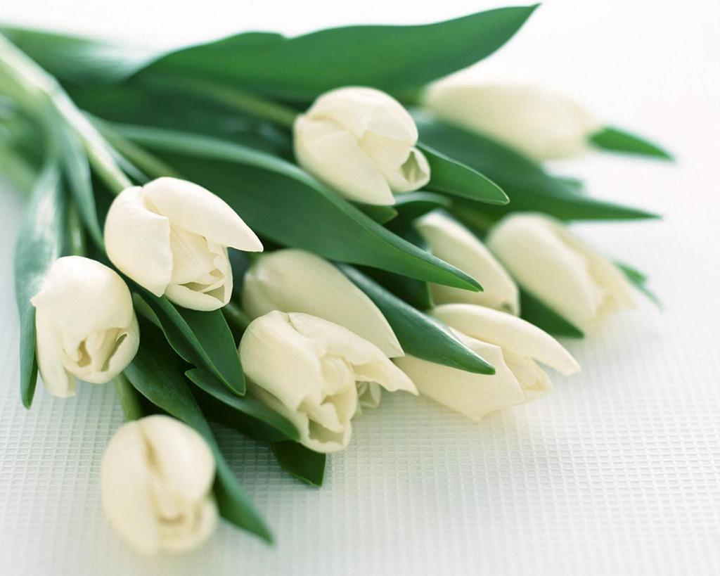 Открытка на 8 марта тюльпаны белые