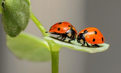 Page medium ladybugs 1593406 1920