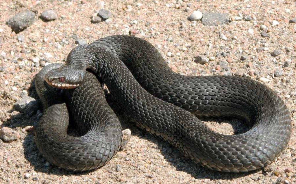 художники змеи живущие в башкортостане с фото тем