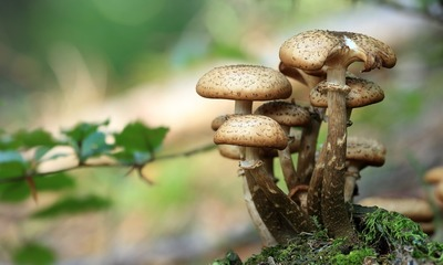 Page medium mushrooms 548360 1920