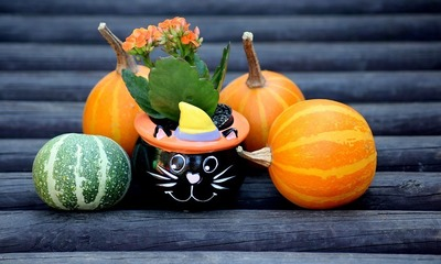 Page medium pumpkins 3754807 960 720