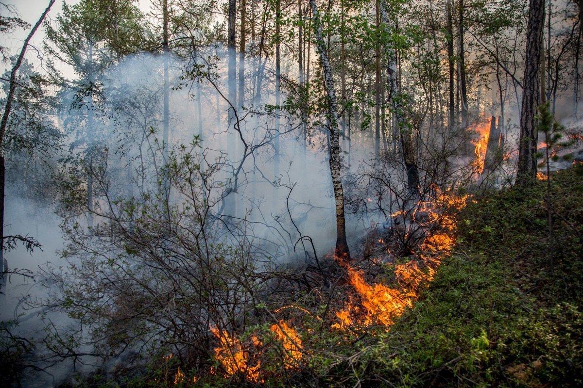 Картинка пожаров лесов