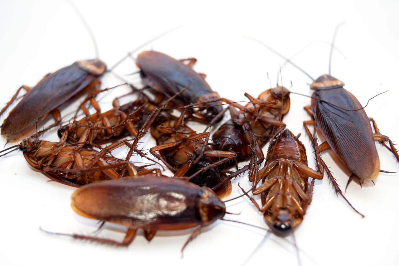 усилить картинки борьбы с тараканами перед другими