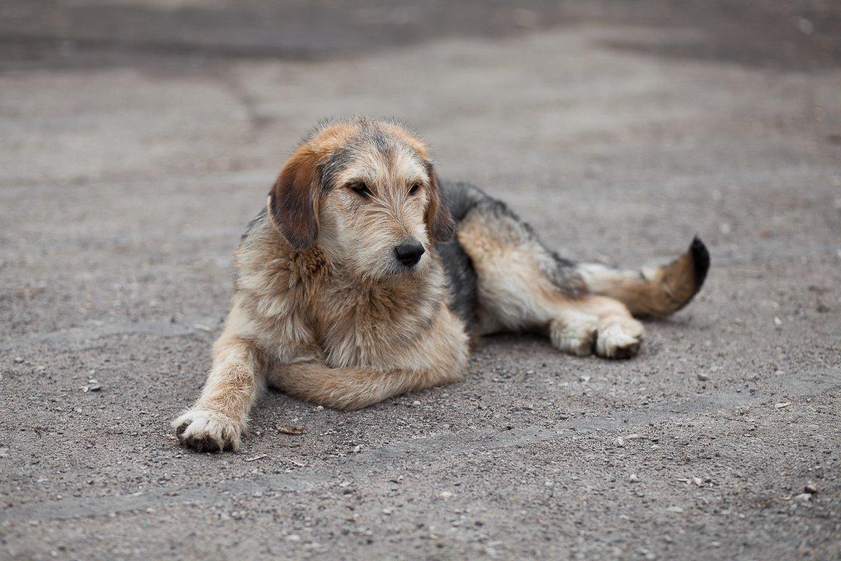Фото собак на улице