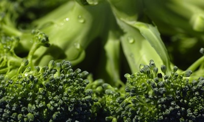 Page medium broccoli 1792236 960 720